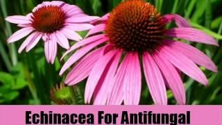 6 Best Antifungal Herbal Remedies
