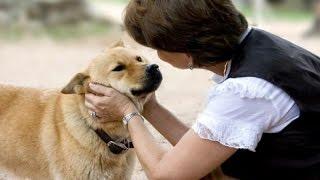 Luar Biasa Anjing Pintar Ini Mengerti Bahasa Manusia