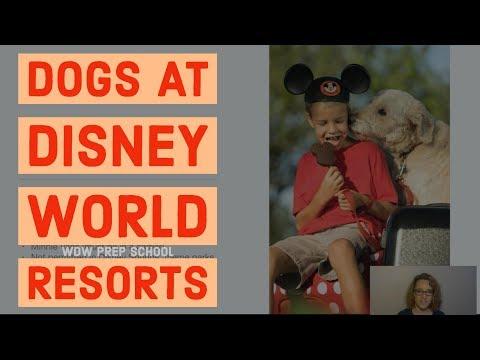 hqdefault - Let's talk dogs at Disney World resorts - PREP155