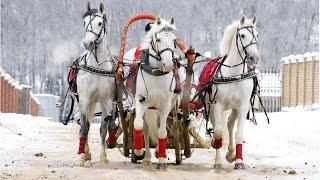 РУССКАЯ ТРОЙКА-Емельяново 15.08.15 (Лошади-Horse–Animal-racing-конь-смотреть-онлайн-скачки)