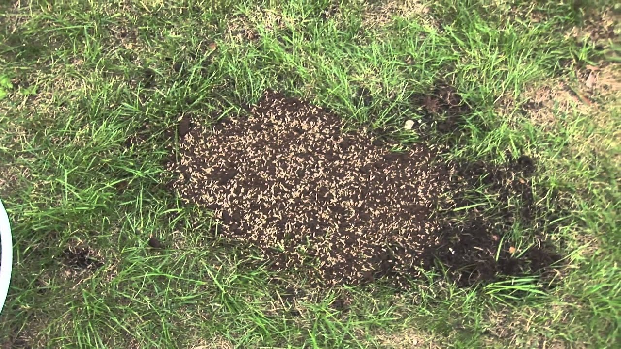 How To Repair A Lawn Youtube
