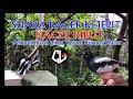 Suara Kacer Kejepit Kacer Ribut  Mp3 - Mp4 Download