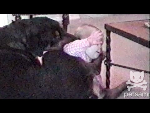 A dog gets jealous of a baby's time on camera
