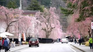 角館武家屋敷・枝垂れ桜 4月23日