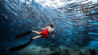FREEDIVING WITH BARRACUDAS IN PHILIPPINES Siquijor Island Must See