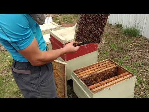 Repeat Beekeeping in December by Tennessee's Bees - You2Repeat