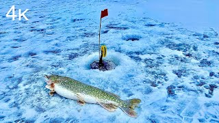 Зимняя рыбалка на жерлицы в Астраханской области 2021