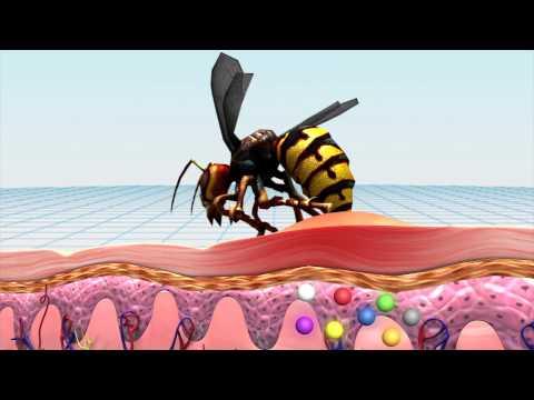 Asian Giant Hornet sting kills dozens in China Mp3