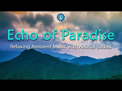 3 Hours Relaxing Ambient Music with Animal Sound -