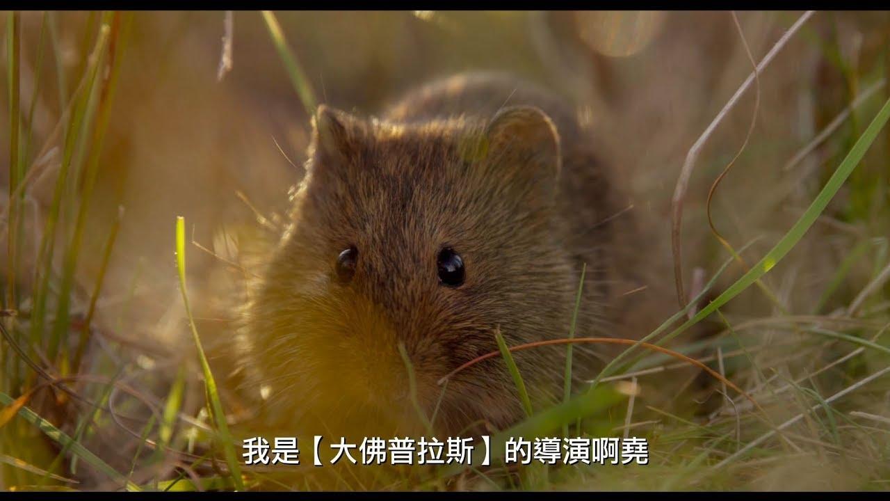 【地球:奇蹟的一天】臺灣限定趣味版預告 05/04震撼視界 - YouTube