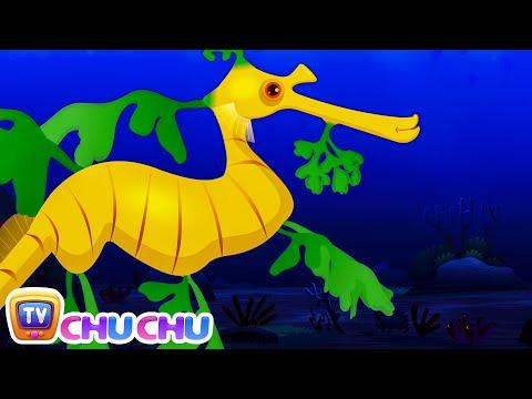 Leafy Sea Dragon Nursery Rhyme   ChuChuTV Sea World   Animal Songs & Nursery Rhymes For Children