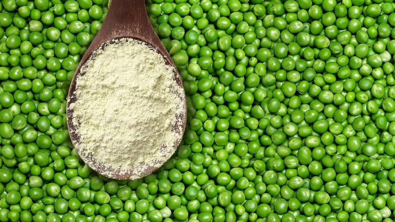 Pea Protein VS Whey Protein - YouTube