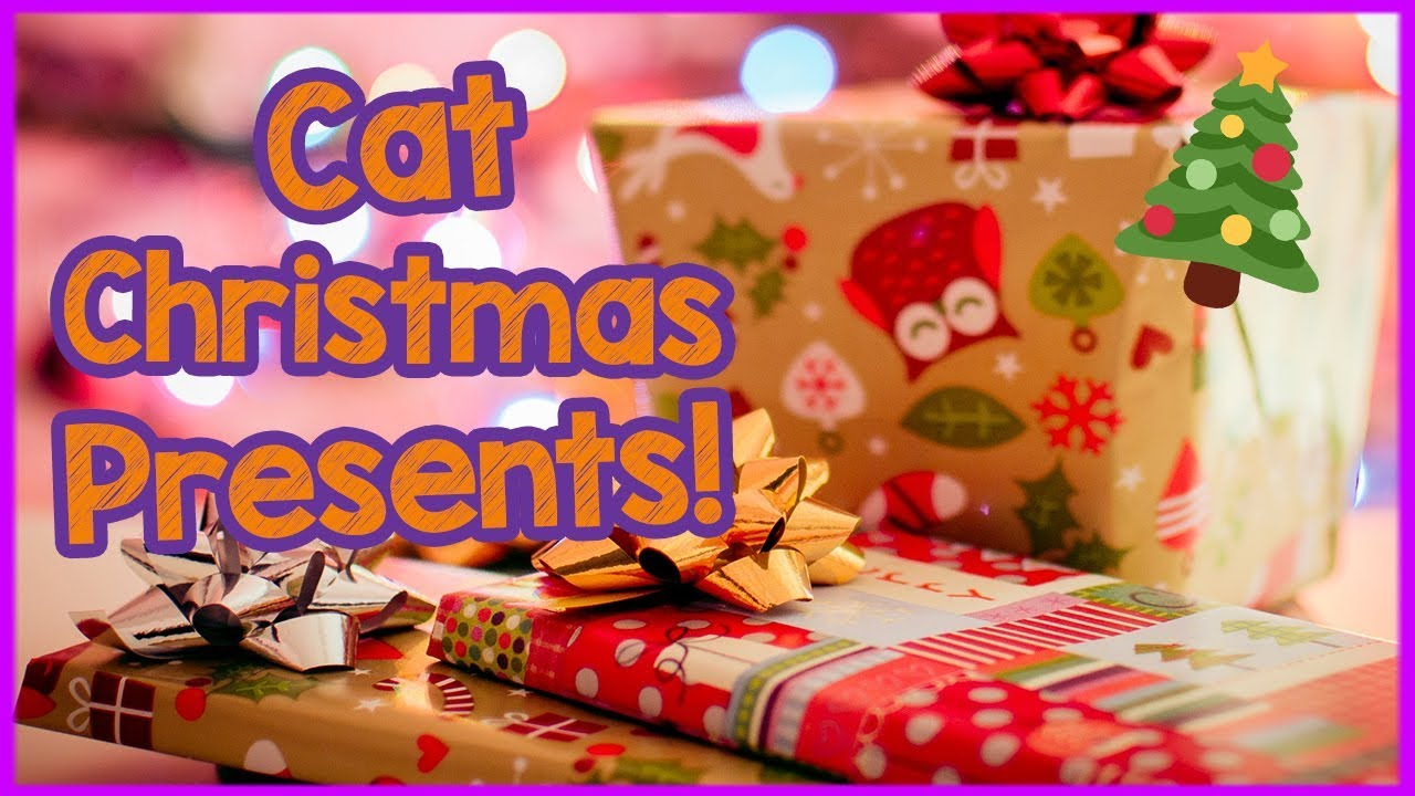 What to Get Your Cat For Christmas - Gifts for Pets!  sc 1 st  YouTube & What to Get Your Cat For Christmas - Gifts for Pets! - YouTube