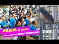Ohara Beraksi Jadi Tontonan Kicaumania Di Murai Batu Bnr Bird Champions  Mp3 - Mp4 Download