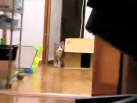 The BEST Stealth Cat with Scary Music