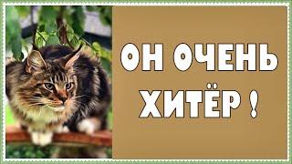 Котята мейн куны - 31. Котик Арчик и его приколы
