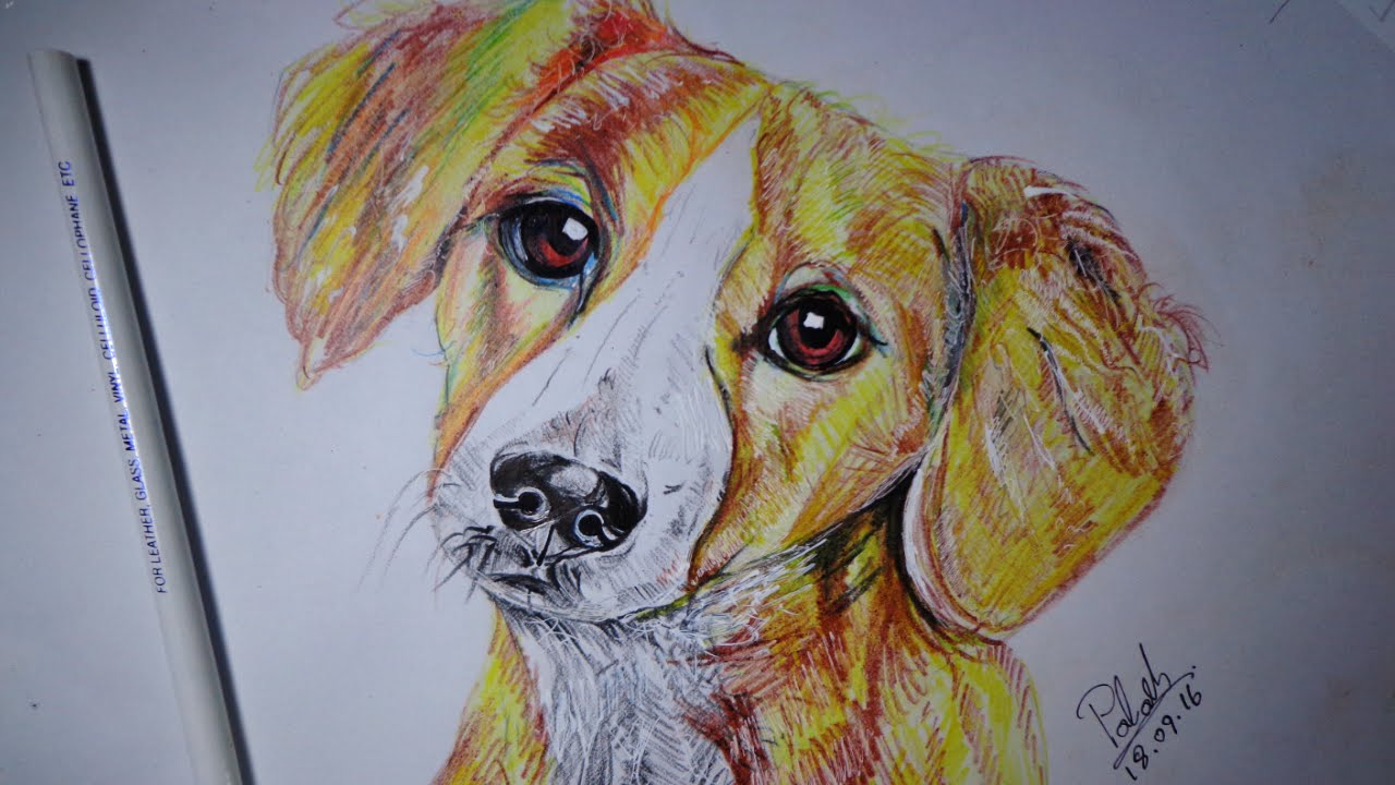 How to Draw a Realistic Dog: 5 Steps (with Pictures) - wikiHow