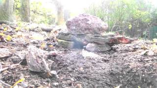 Pit Fall Trapping