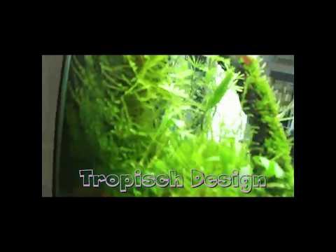 Nano Aquarium By Tropisch Design
