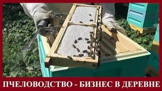 ПЧЕЛОВОДСТВО - ПРИБЫЛЬНЫЙ БИЗНЕС В ДЕРЕВНЕ И НА СЕЛЕ. Производство сотового мёда(ПЧЕЛОВОДСТВО - ПРИБЫЛЬНЫЙ БИЗНЕС В ДЕРЕВНЕ И НА СЕЛЕ. Производство сотового мёда. https://youtu.be/eyonCk5qve8 *** Канал..., 2016-08-09T22:36:16.000Z)