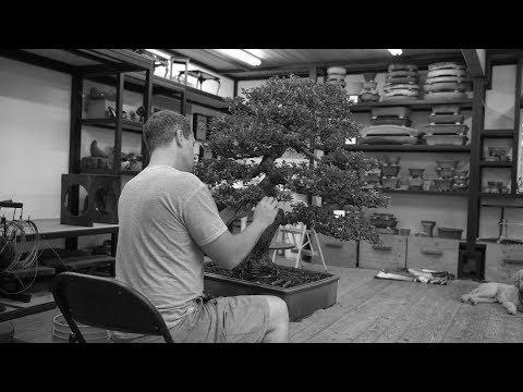In the Studio: Azaleas