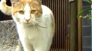浅生ハルミン原作、星野真里主演、鈴木卓 爾監督作品『私は猫ストーカー...