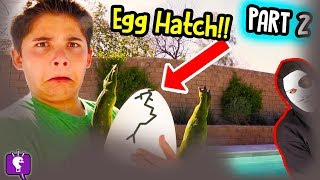 MYSTERY NEST Hatch! Game TRIXSTER Mystery Message Adventure by HobbyKidsTV