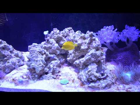 SCA 150g Reef Tank Progression: Episode 3