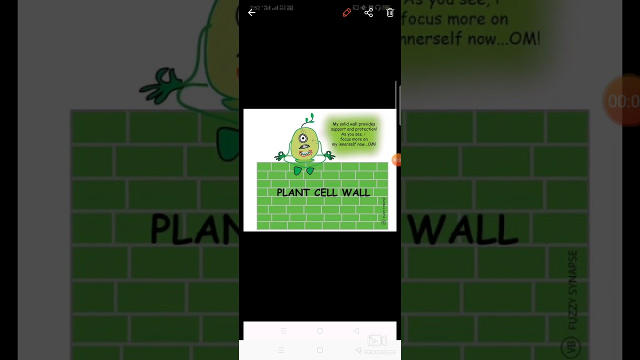 Class 9 plant cell wall - YouTube