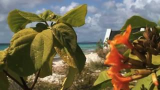 "Bonaire Video: ""Take a Tour of Bonaire"""
