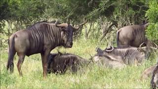 Zuid Afrika, Kruger Park 2017