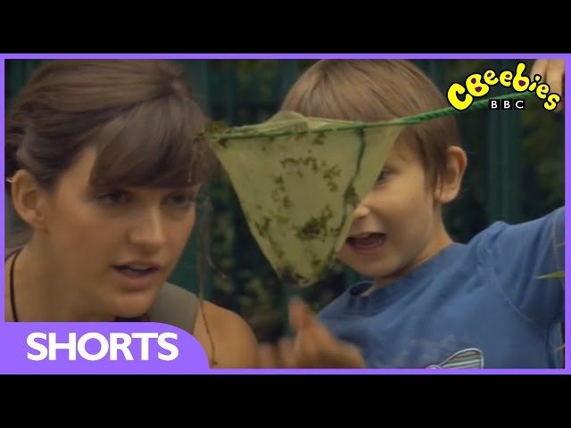 CBeebies: Minibeast Adventure with Jess - Waterboatman