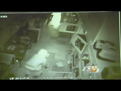 Puppies Stolen From Dallas Pet Store