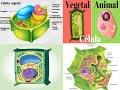 Observación de la Célula Animal y Vegetal..!