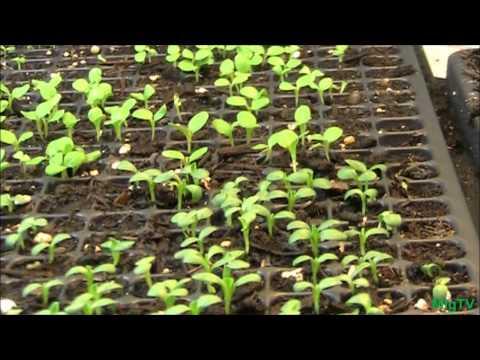 Vegetable Seedling Update