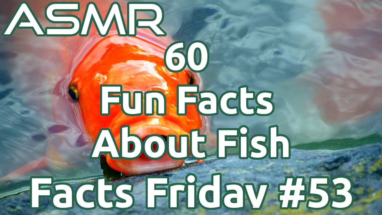 Asmr 60 fun facts about fish facts friday 53 for Facts about fishing