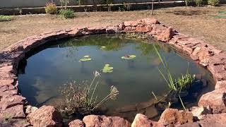 Дачный пруд с кувшинками, общий обзор с  Пуховка