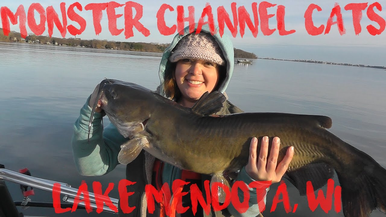 Monster channel cat fishing on lake mendota wi youtube for Lake mendota fishing report