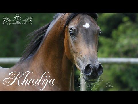 Khadija - Gestüt EMAJ