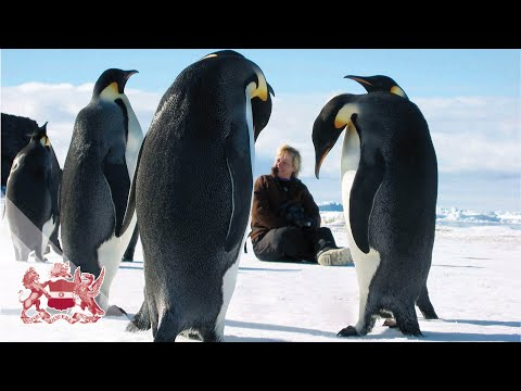 When Antarctica was Green   Jane Francis