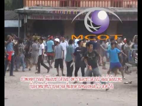 ข่าวภาพนาทีม็อบชาวสวนยางพาราและชาวสวนปาล์มน้ำมันปะทะกับเจ้าหน้าที่ปราบจลาจล 23 ส ค 56
