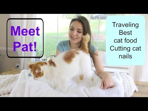 My Minimalist Cat + Cat Care