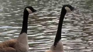 Build a Better Home for Animals - Cincinnati Zoo