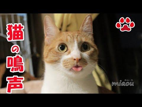 9月の猫部屋の音。主にまやの鳴声【瀬戸の猫部屋日記】Sound of cats room in September (mainly Maya's cute voice)