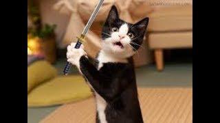 Боевые коты! Приколы с котами кошки против собак##29. Fighting cats! Сats against dogs.##29