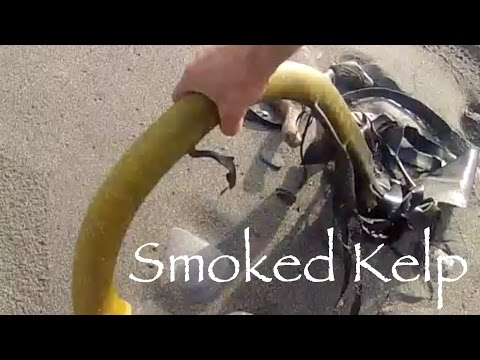 Catch and cook Healthy smoked seaweed  kelp with Josh James