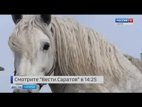 """Анонс программы """"Вести. Саратов"""" в 14.25 от 29 апреля 2019"""