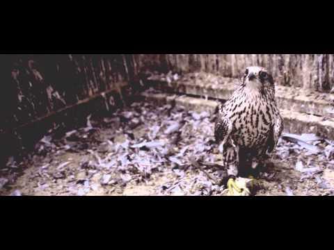 Sparrow Falls - Shipburner (OFFICIAL VIDEO)