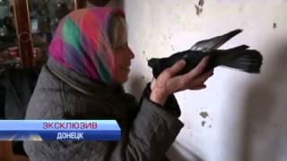 Из аэропорта Донецка везут металлолом: эксклюзивный репортаж(Чего же ожидают от этих решений парламента сами жители Донбасса? По обе стороны линии разграничения работа..., 2015-03-22T23:33:55.000Z)