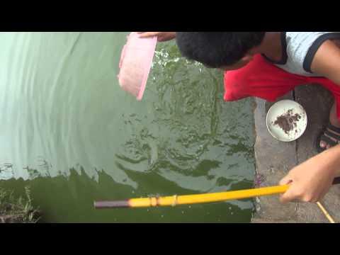 Trẻ trâu đi câu cá